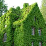 گرین وال یک خانه با گیاه پاپیتال