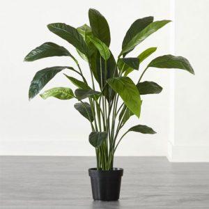 گیاهان برگی
