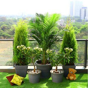 گل و گیاه فضای باز