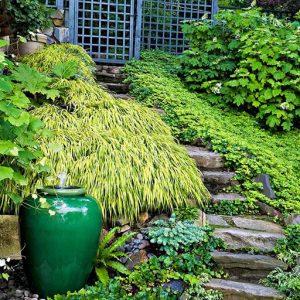 گیاهان پوششی