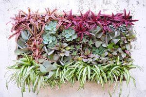 بهترین گیاهان دیوار زندگی