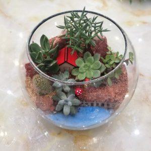 تراریوم با گل های کاکتوس و ساکولنت