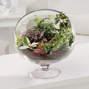 گلدان شیشه ای باغ کوچک